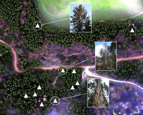 Schadensanalyse des Waldes aus der Luft